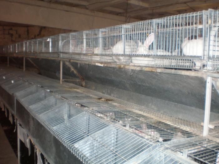 Продам промышленную кролиководческую ферму