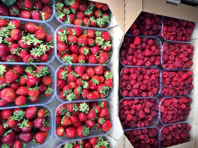 Органическая ягодная ферма
