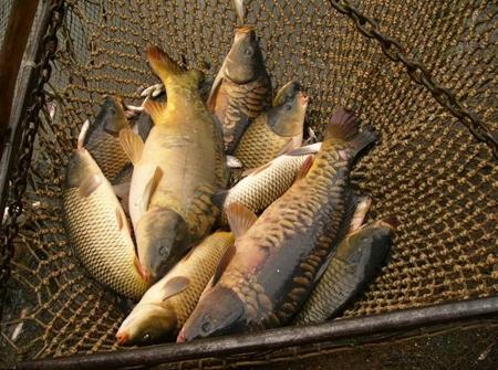 Продам рыбхоз