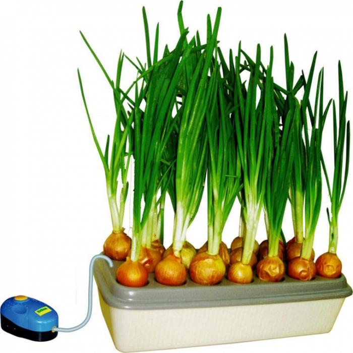 Бизнес на гидропонике: выращивание зелени