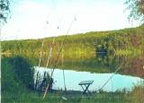 Зарыбленный пруд под киевом