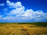 Продажа агробизнеса (земли сельского назначения)