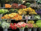 Продам цветочный бизнес в Киеве
