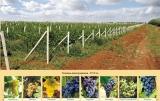 Продается агробизнес в Крыму