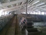 свинокомплекс в Сумской области