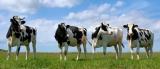 Молочная ферма на продажу