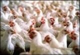 Прибыльный действующий бизнес: птицеферма.