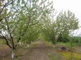 Фруктовый сад, Болгария