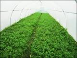 Высокорентабельное тепличное хозяйство и интернет магазин органических продуктов.