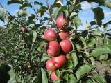 Фермерское хозяйство в Республике Беларусь