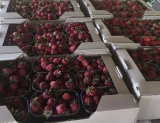 Органическая ягодная ферма, 22Га