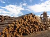Продаю/сдаю в аренду деревообрабатывающее производство
