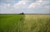 Действующее сельскохозяйственное предприятие