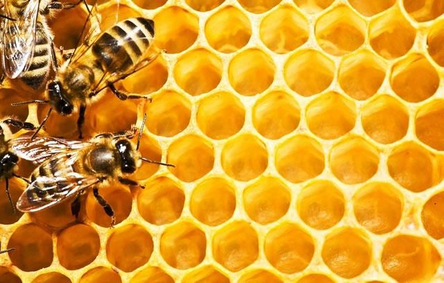 Инвестиции в пчеловодство. В 2018 году Украина может стать второй в мире по экспорту меда