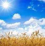 Молоко, мясо, ячмень - что еще подорожает будущей осенью?