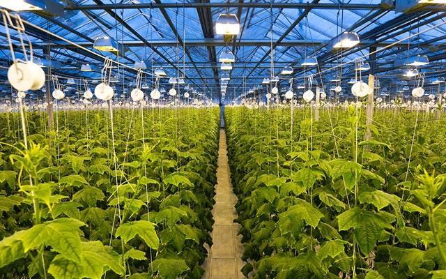 Тепличный бизнес в Украине: круглогодичное органическое выращивание овощей