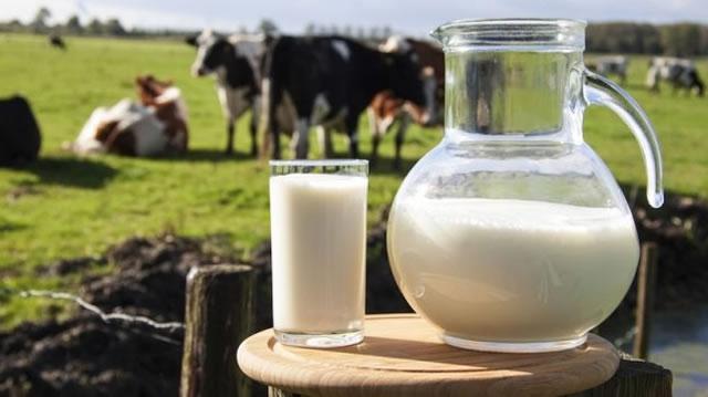 Производство молока в Украине 2021: Полтава лидирует