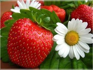 Социальная сеть для фермеров или почему бизнес на доставке натуральных продуктов на дом полезен каждому...