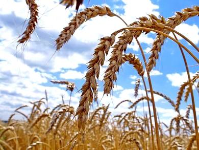 Купить агробизнес в Украине - оптимальная инвестиция 2012 года.