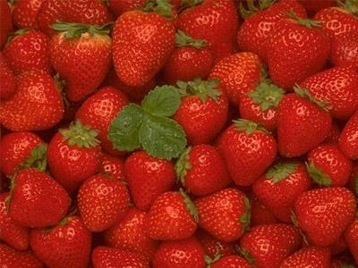Рентабельность бизнеса по выращиванию ранней клубники - более 300%.