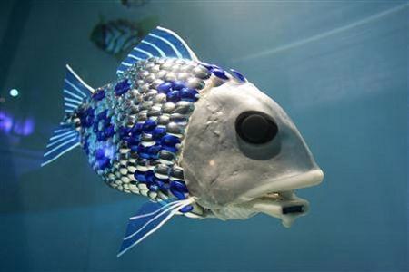 Пример организации бизнеса по выращиванию промышленной рыбы с нуля.