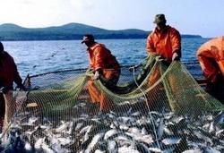 Перспективный и прибыльный: бизнес по выращиванию рыбы в центре внимания политиков и инвесторов