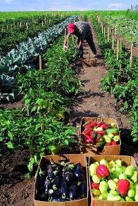 Инвестиции в агробизнес - вечные ценности...