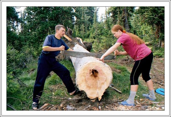 Готовый бизнес: какой доход от лесопилки?