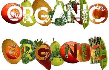 Инвестиции в бизнес будущего: выращивание органических продуктов